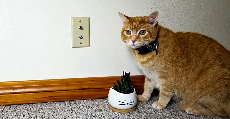 Best GPS Tracker for Cats Review